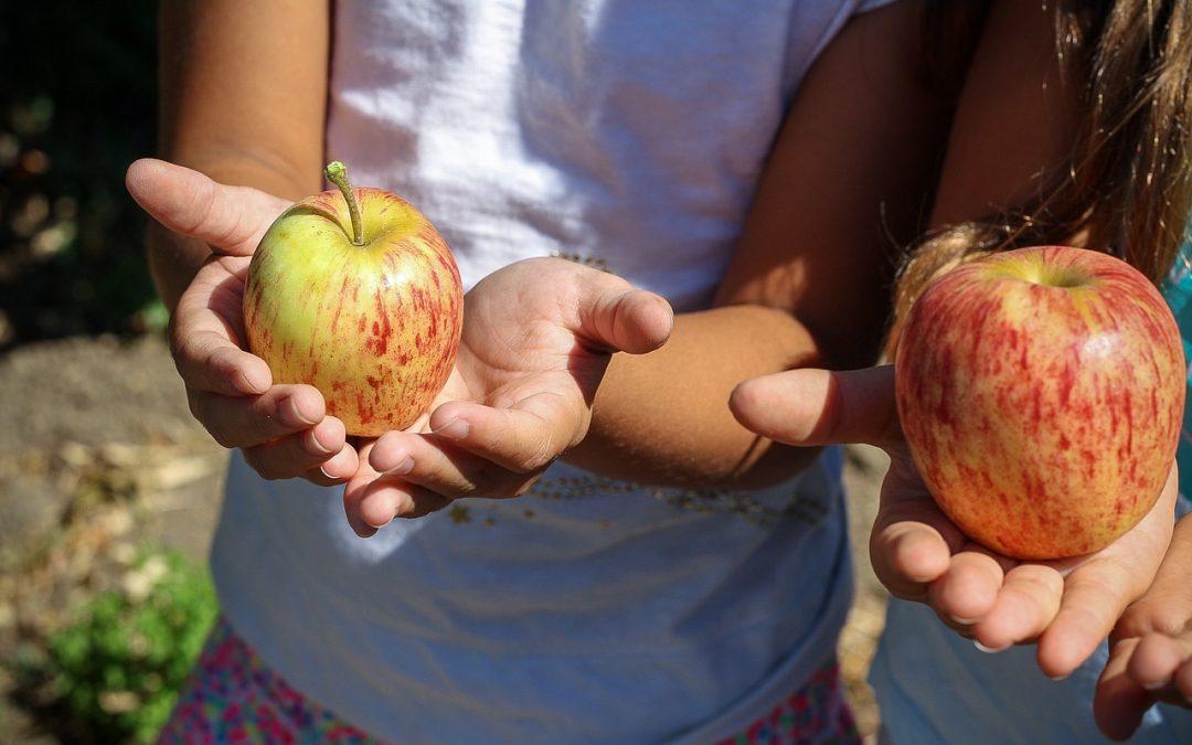 10 Maravillosas razones para el huerto escolar ecológico